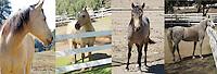 Butters, Skip, Skywalker, Peca, Dusty - Fun on the Ranch