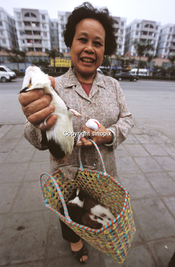 Guinea pigs are sold live a as popular food that is used in hot pot and a medicinal broth that is believed to be good for health and to keep the hair from going grey...PHOTO BY SINOPIX