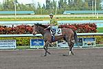 30 January 2010: Sunshine Millions Distaff Granted Tiger (Eddie Castro) at Gulfstream Park in Hallandale Beach, FL.