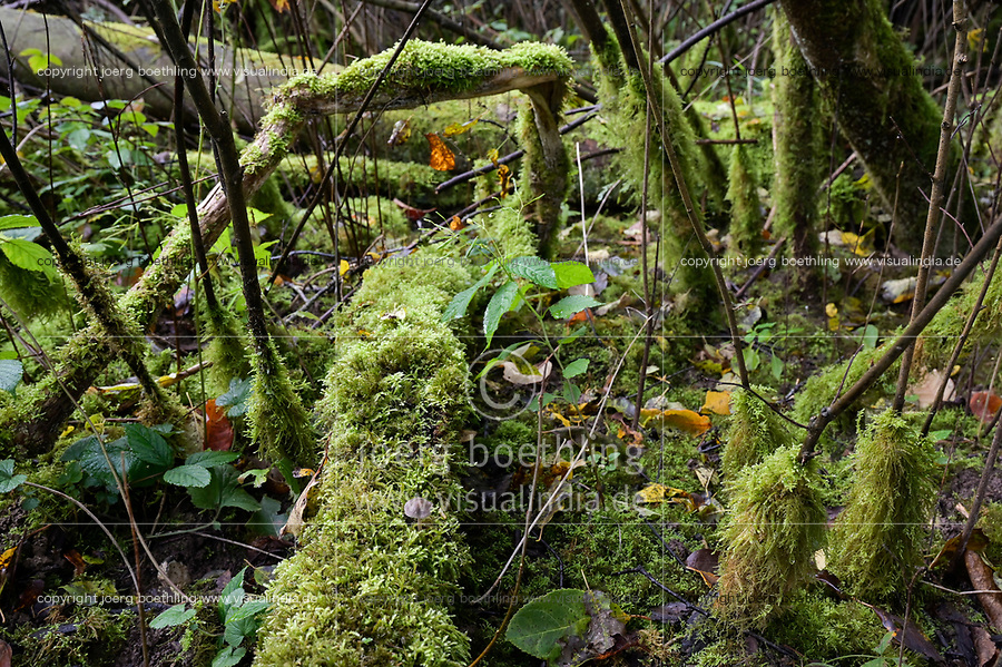 GERMANY, Ruegen, forest with moss  / DEUTSCHLAND, Mecklenburg-Vorpommern, intakter Wald, Laubwald mit Totholz und Moos