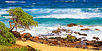 Tree on the beach in Lihue, with gold sand, rocks, and the turquoise Pacific Ocean waves in the background, in Kauai Island in Hawaii