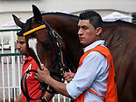 May 26, 2014: Apropos in the paddock before the Winning Colors at Churchill Downs.  She is owned by Claiborne Farm, trained by Albert M. Stall Jr., and ridden by Shaun Bridgmohan.  Mary M. Meek/ESW/CSM