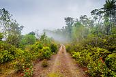 route forestiere dans la brume