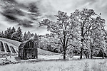 Infrared image of old barn with trees and vineyard