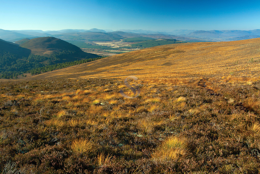 Invereshie and Inchriach National Nature Reserve from Geal Charn, Glen Feshie, Cairngorm National Park