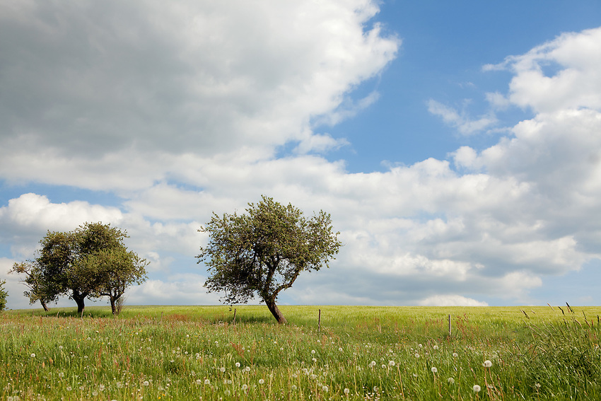 Europa, DEU, Deutschland, Hessen, Rhoen, Hessische Rhoen, Eichenzell, Typische Landschaft, Himmel, Wolken, Baeume, Kategorien und Themen, Natur, Umwelt, Landschaft, Landschaftsfotos, Landschaftsfotografie, Landschaftsfoto, Tourismus, Touristik, Touristisch, Touristisches, Urlaub, Reisen, Reisen, Ferien, Urlaubsreise, Freizeit, Reise, Reiseziele, Ferienziele<br /> <br /> [Fuer die Nutzung gelten die jeweils gueltigen Allgemeinen Liefer-und Geschaeftsbedingungen. Nutzung nur gegen Verwendungsmeldung und Nachweis. Download der AGB unter http://www.image-box.com oder werden auf Anfrage zugesendet. Freigabe ist vorher erforderlich. Jede Nutzung des Fotos ist honorarpflichtig gemaess derzeit gueltiger MFM Liste - Kontakt, Uwe Schmid-Fotografie, Duisburg, Tel. (+49).2065.677997, ..archiv@image-box.com, www.image-box.com]