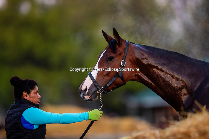 April 26, 2021: Champion Gamine gets a bath at Churchill Downs in Louisville, Kentucky on April 26, 2021. EversEclipse Sportswire/CSM