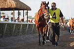 Data Link at Gulfstream Park. 03-03-2012.  Arron Haggart/Eclipse Sportswire.