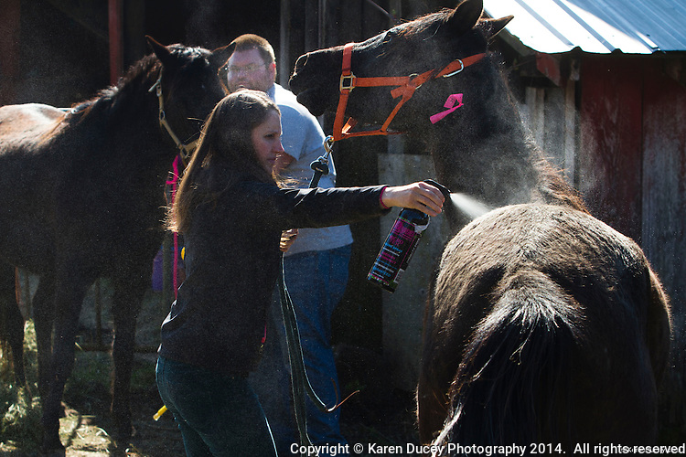 Hannah Mueller, DVM, treats a horse for rain rot, a bacterial infection caused from excessive moisture and lack of air, on Summer Raffo's farm in Oso, Washington on April 1, 2014. The 16 horses belong to Summer Raffo, who died in the Oso mudslide on March 22, 2014. Along with help from another vet and volunteers the horses received basic vet care, grooming and were fed fresh hay. Mueller is co-founder and vice president of the Northwest Equine Stewardship Center and practice owner of Cedarbrook Veterinary Care in Snohomish, Washington