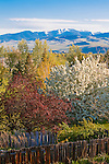 Trees in spring time on the hills around Missoula, Montana