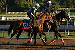 ARCADIA, CA  OCTOBER 26: Breeders' Cup Sprint entrant Landeskog, trained by Doug F. O'Neill, exercises in preparation for the Breeders' Cup World Championships at Santa Anita Park in Arcadia, California on October 26, 2019. (Photo by Casey Phillips/Eclipse Sportswire/CSM)