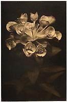 This is a Platinum Palladium print on Velum over pure gold leaf. <br /> Image size 25x16 cm