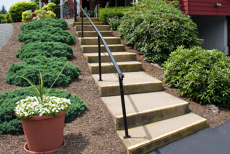 Entrance house plantings with steps, undyed hardwood mulch, evergreen Juniperus groundcovers, rhododendrons, stabilizing slope hillside, container pot of Calibrachoa, sun, stairs entry landscaping