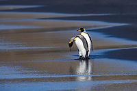 Antarctica - Crozet Archipelago