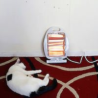 The cat of Alice Kimmins, 62, in front of an electric heater in her flat.