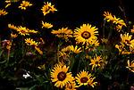 Columbia River Gorge, Tom McCall Preserve, Rowena Overlook, Old Gorge Highway, Hood River, Oregon wildflowers.