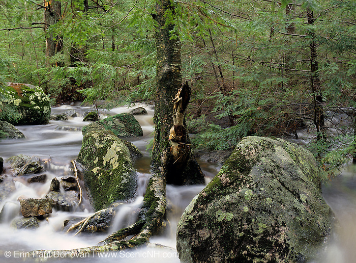 Rushing water flowing over and around the rocks in the White Mountain National Forest of New Hampshire USA which is part of New England