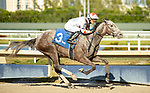 MARCH 27, 2021: #3 CRAZY BEAUTIFUL and Jose Ortiz make a bid for the Kentucky Oaks by winning the $200,000 Grade II Gulfstream Park Oaks for Trainer Kenny McPeek on Florida Derby Day at Gulfstream Park in Hallandale Beach, Florida on March 27, 2021. Carson Dennis/Eclipse Sportswire/CSM