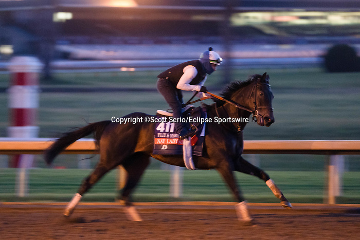 November 5, 2020: Nay Lady Nay, trained by trainer Chad C. Brown, exercises in preparation for the Breeders' Cup Filly & Mare Turf at Keeneland Racetrack in Lexington, Kentucky on November 5, 2020. Scott Serio/Eclipse Sportswire/Breeders Cup/CSM