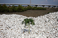 Piles of discarded oyster shells lie on the beaches of Zhanjiang, Guangdong Province. Large scale over exploitation of seafood has damaged the mangroves of the region. Over the past century, the world has lost over 50% of its coastal mangroves. They have been cleared mainly to make way for commercial shrimp and fish farms. The unique trees which live in salt water are valued for the ability to protect shorelines and are home to a diverse array of flora and fauna. 2010