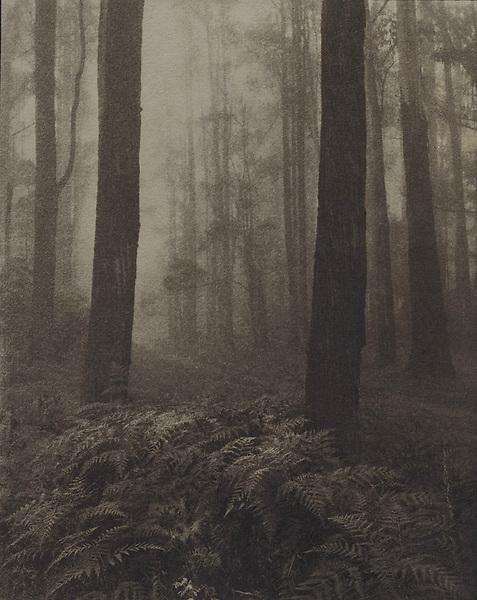 Ferns on a foggy road<br /> Cyanotype + Coffee toning