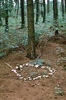 Hexenring, Feenring, kreisförmige Ansammlungen von Pilzen, die dadurch entstehen, dass das Myzel eines Pilzes in alle Richtungen gleich schnell wächst