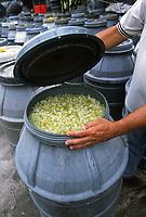 - Calabria, Cedar Coast, fruits of cedar in pickling brine for the preparation of the candied cedar<br /> <br /> - Calabria, Costa dei Cedri,  frutti di cedro in salamoia per la preparazione del cedro candito