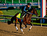 LOUISVILLE, KY - APRIL 29: Combatant, trained by Steve Asmussen, exercises in preparation for the Kentucky Derby at Churchill Downs on April 29, 2018 in Louisville, Kentucky. (Photo by Scott Serio/Eclipse Sportswire/Getty Images)