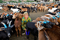 Mongolia, Bayan-Ulgii, Ulgii, Altai Mountains near Tsambagarav Mountain. Family herding and milking goats.