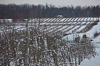Amérique/Amérique du Nord/Canada/Québec/ Env de Québec/Île d'Orléans: Le Vignoble sous la neige
