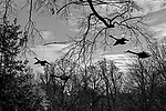 """Decoupages""<br /> Birds Sculpture<br /> Washington DC Zoo<br /> Washington DC<br /> From the ""Captivity"" series<br /> © Thierry Gourjon-Bieltvedt"