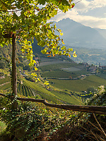 Weinbau  am Algunder Waalweg bei Meran, Region Südtirol-Bozen, Italien, Europa<br /> wine cultivation at hiking trail Algunder Waalweg,  Lagundo village near Merano, Region South Tyrol-Bolzano, Italy, Europe