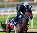 November 1, 2020: Come Dancing, trained by trainer Carlos Martin, exercises in preparation for the Breeders' Cup Filly & Mare Sprint at Keeneland Racetrack in Lexington, Kentucky on November 1, 2020. Scott Serio/Eclipse Sportswire/Breeders Cup /CSM