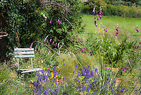 Cottage garden with rustic blue chair, herb lavender Lavandula angustifolia, arching ornamental grasses, orange Iceland poppies Papaver nudicaule