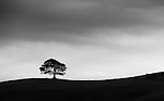 Nettlecombe Tree