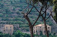 Europe/Italie/Côte Amalfitaine/Campagnie/Campagnie/Cetara : Fermes et plantations de citronniers