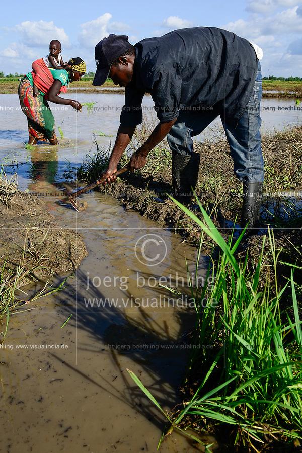 BURKINA FASO, Bobo Dioulasso, village, Bama, , paddy farming, production of Hybrid rice seeds for NAFASO, replanting of rice seedlings from nursery to field / GIZ Projekt ProCIV Grüne Innovationszentren, WSK Reis, Reis Hybrid Saatgut Anbau fuer  Firma Nafaso, Saatgutherstellung, Reis Setzlinge zum Umpflanzen, Frau Korotoum Sawoadogo