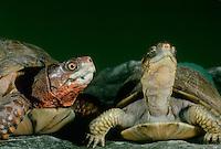 Reptiles/turtles/tortoises