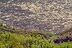 Log raft in Spirit Lake, Mount St. Helens Volcanic National Monument, Washington, USA<br /> <br /> Canon EOS-1V, EF80-200mm lens, Fujichrome Velvia film