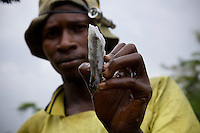 A miner shows off a quartz rock flecked with gold. He pulled the rock from Makala Mine in north eastern DRC. The  abandoned mine  is exploited by hundreds of independent miners from teh surrounding towns and villages. The quarts rock will late rbe pulverized by hand and processed using mercury to extract the fine bits of gold that pepper the stones.