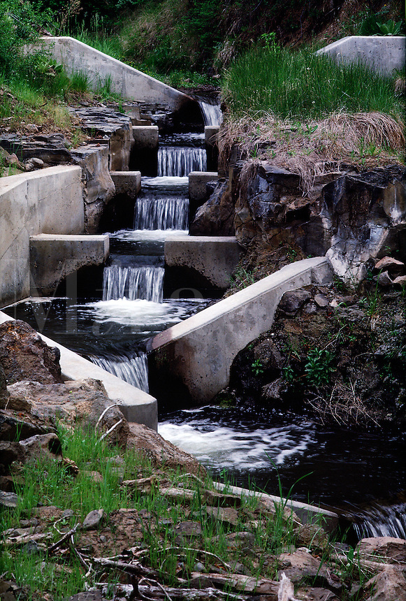 Fish ladder for spawning steelhead. #5515. Oregon.