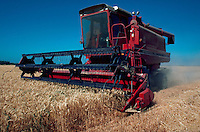 Wheat harvesting