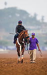 DEL MAR, CA - OCTOBER 28:  Mind Your Biscuits, owned by J Stables, Head of Plains Partners LLC, All American Horses LLC, Daniel Summers & Michael E. Kisper and trained by Chad Summers, exercises in preparation for TwinSpires Breeders' Cup Sprint at Del Mar Thoroughbred Club on October 28, 2017 in Del Mar, California. (Photo by Alex Evers/Eclipse Sportswire/Breeders Cup)