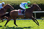April 19, 2014 Ageless wins the Giants Causeway Stakes.