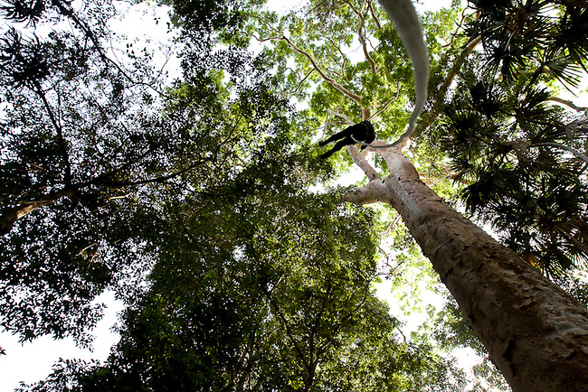 A WCS field worker climbs a tree to monitor a Macaw nest in the Mayan Biosphere.