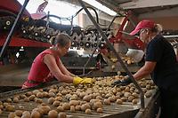 CROATIA, Belica, potato farming at Dodlek Agro / KROATIEN, Belica, Kartoffelanbau bei Dodlek Agro, Kartoffelsortierung und Lager