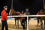 DUBAI,UNITED ARAB EMIRATES-MARCH 24:  Leadponies at Meydan Racecourse on March 24,2017 in Dubai,United Arab Emirates (Photo by Kaz Ishida/Eclipse Sportswire/Getty Images)