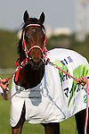 08 May 2011: Grand Prix Boss, 2010 Champion 2 year old, wins the 16th NHK Mile Cup at Tokyo Racecourse