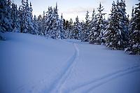 Ski tracks cut through fresh powder snow at Showdown Ski Area on King's Hill in the Little Belt Mountains near Neihart, Montana, USA.