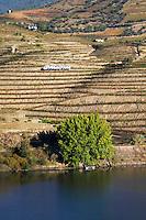 vineyards alves de sousa douro portugal